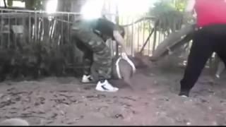 Немецкая Овчарка против Питбуля(, 2015-11-03T18:50:16.000Z)