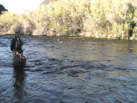 east walker river big brown pt.1