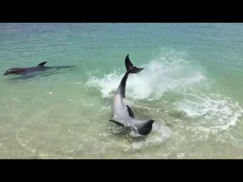 DOLPHiNS GONE WiLD! 🐬 OCEAN ADVENTURE MARiNE PARK, SUBiC BAY, PHiLiPPiNES