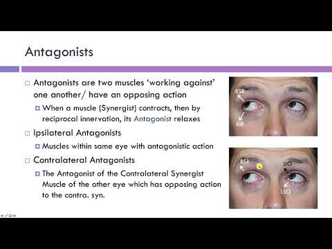 Synergists & Antagonists