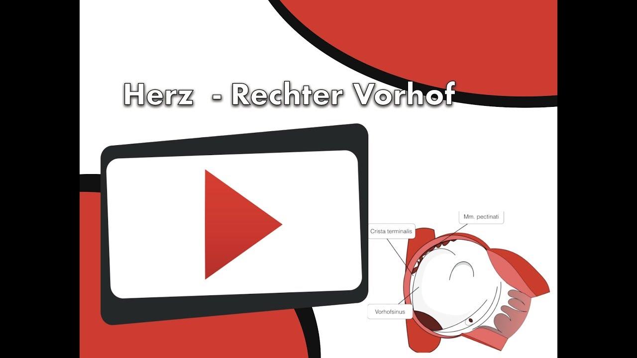 Nett Rechter Vorhof Bilder - Anatomie Und Physiologie Knochen Bilder ...