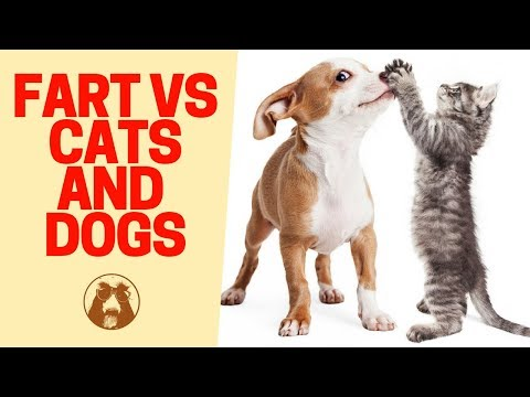 Cats  🐱 and Dogs 🐶 Scared of Farts - Funny 😂 Cat and Dog Videos