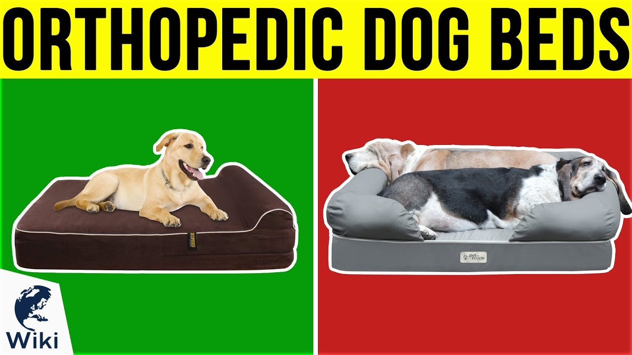 10 best orthopedic dog beds 2019