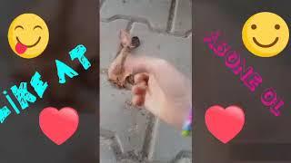 Rahatlatıcı yaprak kırma videosu!!