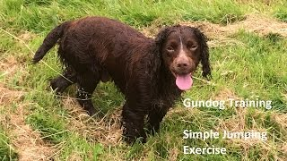 Gundog Training - Simple Jumping Exercise