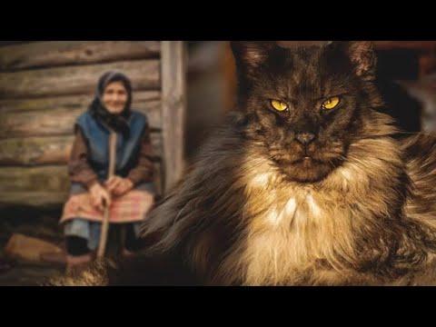 Бабушке отдали старого больного мейн-куна. Но никто не ожидал, что сделает кот со старушкой