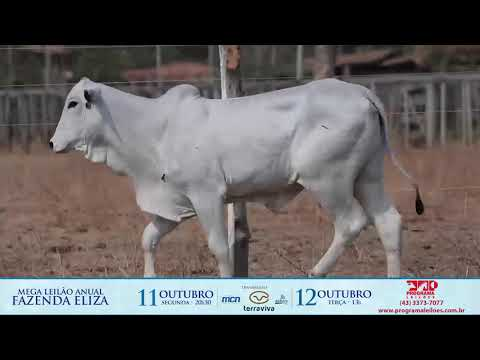 LOTE 237