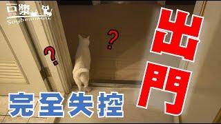 【豆漿 - SoybeanMilk】豆漿出門超級失控.... 變成黑貓?