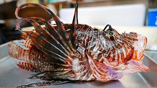 Japanese Street Food - LIONFISH Avocado Stir Fry Sashimi Okinawa Seafood Japan