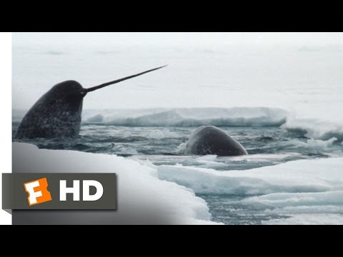 Arctic Tale (6/10) Movie CLIP - The Narwhals (2007) HD