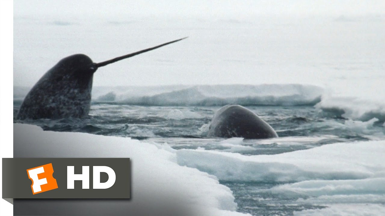 Download Arctic Tale (6/10) Movie CLIP - The Narwhals (2007) HD