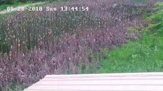 MCP Wetlands Live Stream thumbnail