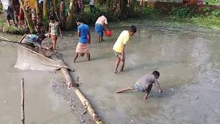 Village Workers and Kids Working Hard to Catching Unlimited Fish in Small Pond at BD Village।BD Fish