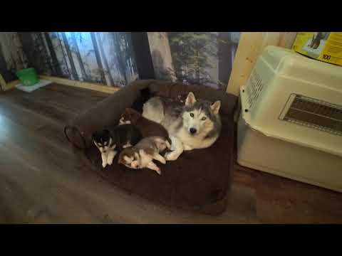 2020-08-13  puppies 4 weeks old