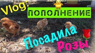 посадила розы/приготовила обед/пожарила блинчики /управлялась на огороде /Виталик и Ангелина