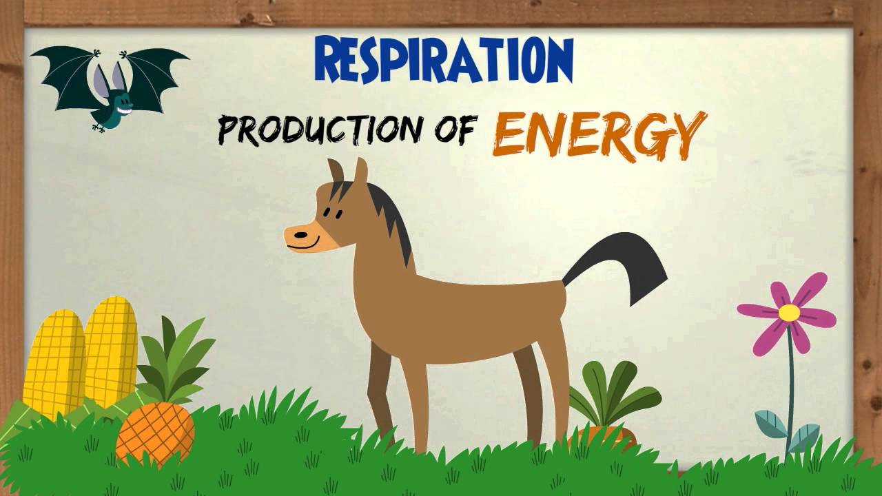 is photosynthesis respiration