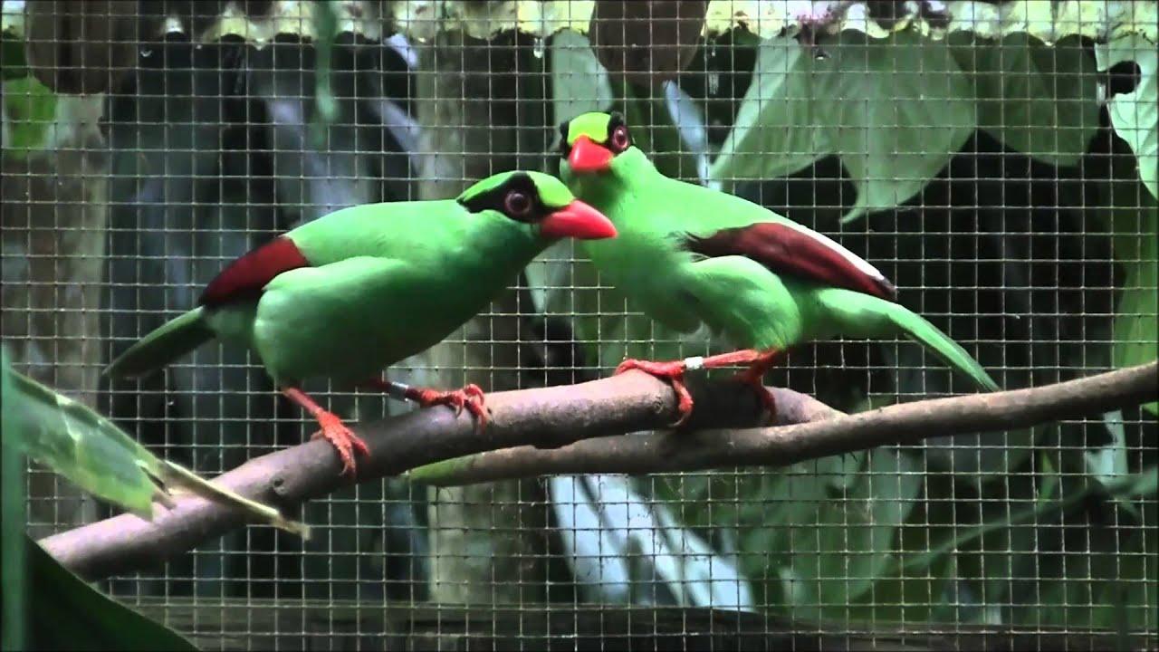 Studi: Populasi Burung Dunia Turun Drastis, di Jawa Lebih Banyak Hidup di Kandang