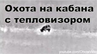 Охота на кабана с тепловизором видео 2012-2013 Wild boar hunting in Russia.