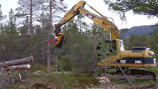 Cat excavator cut pine trees 2