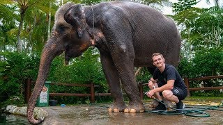 GIVING AN ELEPHANT A BATH!!!