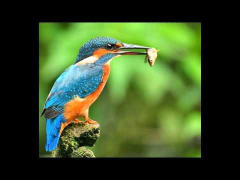 top 10 loài chim đẹp nhất hành tinh