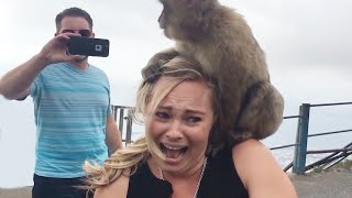 Funny Animals With People  😂🔥 Try Not To Laugh | Hilarious Fail Videos 2020