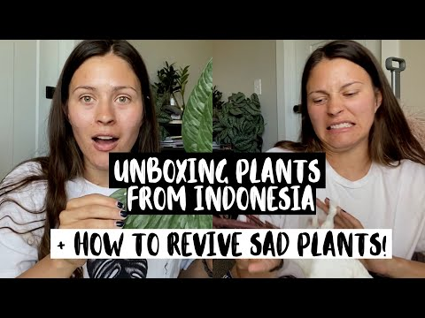 Unboxing Houseplants From GREENSPACES.ID | Plant Mail From Indonesia!