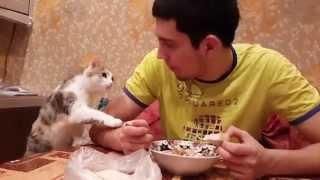 Кошка просит покушать