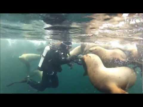 Hornby Island Scuba Diving with Sea Lions BC, Canada, 2013