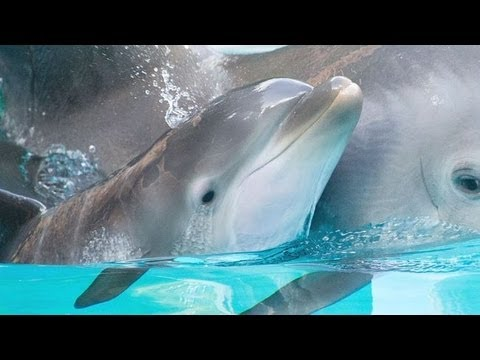Photos Of A Baby Bottlenose Dolphin At SeaWorld