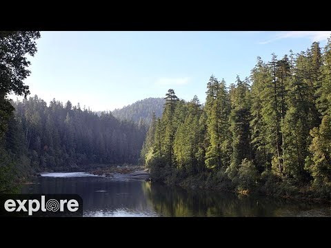 Redwood Forest Camera - live stream from California