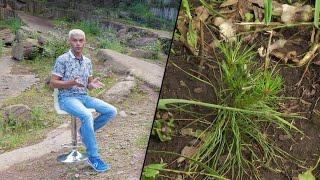 Как выращивают деревья, кто работал в лесничестве, затопленном для ГЭС? «Таёжный спецназ» 10.08.2020