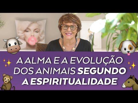 márcia-fernandes-fala-sobre-a-alma-e-evolução-dos-animais-dentro-da-espiritualidade