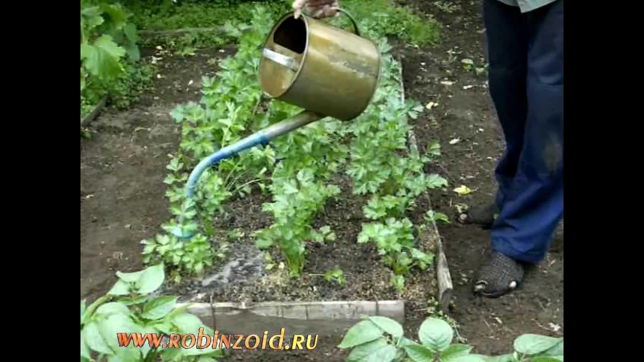 с.дьяков.как приготовить питательную брагу