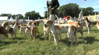 The Royal Agricultural University Beagles And Leadon Vale Basset Hounds At The Festival 2015