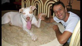 No te puedes perder la emocionante historia del perro Davi y su salvador Wilson...