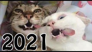 Śmieszne koty 2021