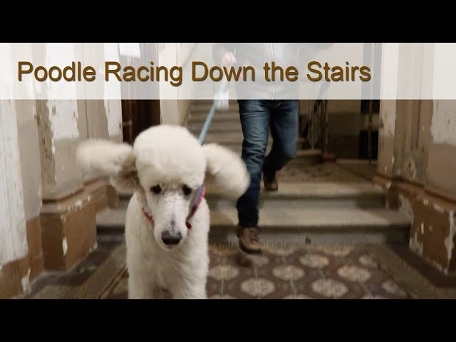A Race Down the Stairs