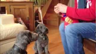 Feelwells Chunky Beef Wheat Gluten Free Dog Treats - Myitchydog.co.uk