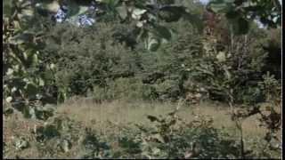 La Veuve Couderc - Alain Delon & Simone Signoret