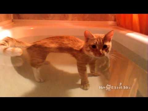 Cat At Periscope Depth (На перископной глубине)