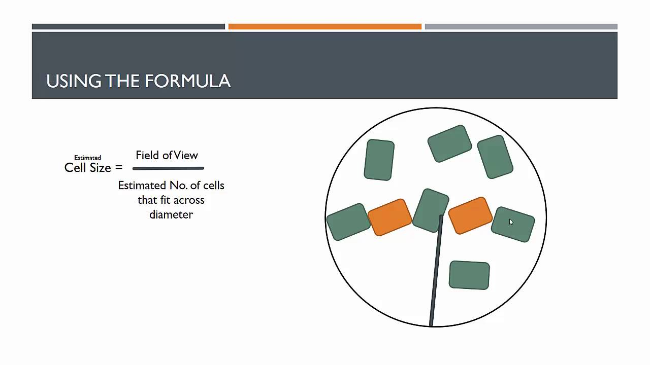 medium resolution of s3 how to draw scaled diagrams of red and white blood cells