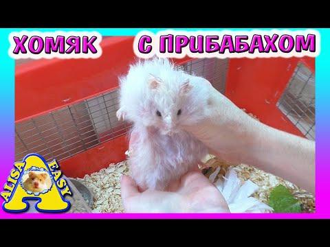 СТРАННЫЙ ХОМЯЧОК / ХОМЯК ЧУДИТ  / УБОРКА У ХОМКИ /  Alisa Easy Pets