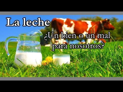 La leche ¿Un alimento necesario?|Mini documental (1)