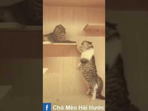 [Love TikTok] Pet Funny Best funny Dog Video Cat Funny 12