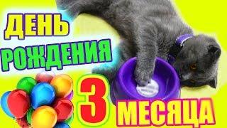 День Рождения Котенка Баттерса  исполнилось 3 месяца покупаем подарки и играемся