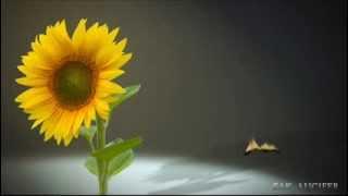 [Old Song 05] ไม้ขีดไฟกับดอกทานตะวัน - วิยะดา โกมารกุล ณ นคร