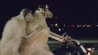 Volkswagen Motorradfahrende Schafe