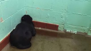 when-she-found-this-shelter-dog-stricken-with-fear-in-the-corner-she-knew-that-something-wasn-t-ri