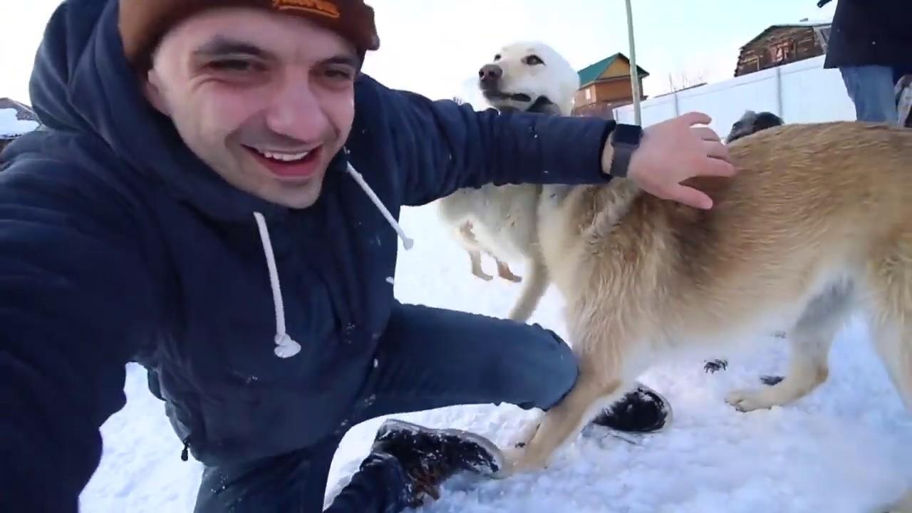Наш частный приют для собак. Екатеринбург